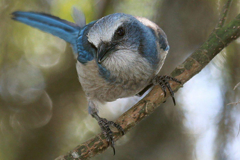 Birding Festivals Scheduled For February 2019 Birdwatching