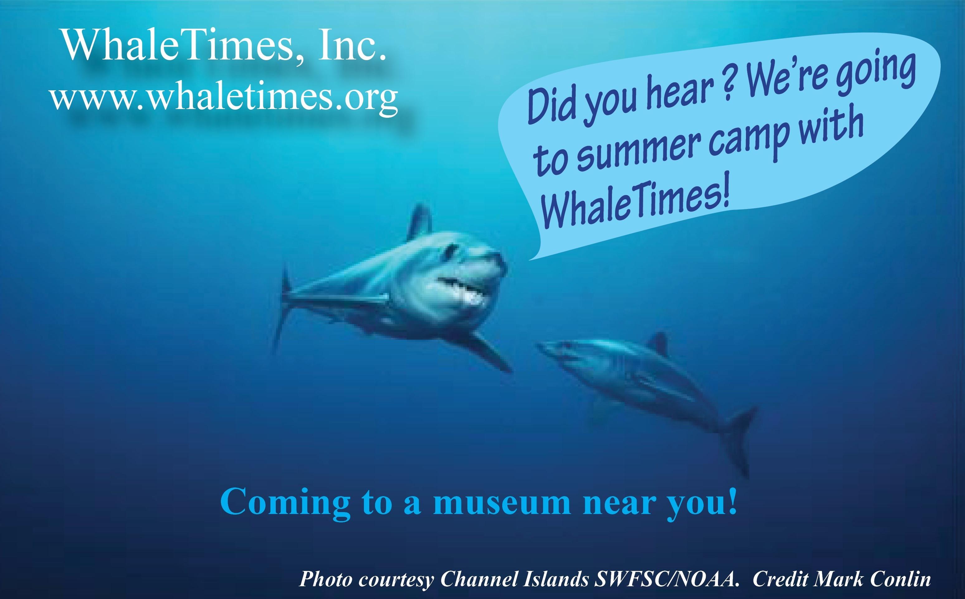 Fintastic Friday Whaletimes Inc