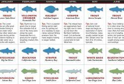California Fishing Calendar