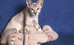 Cat Pregnancy A Week Week Pregnancy Calendar Pets4homes
