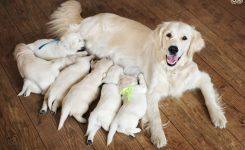 Dog Pregnancy A Week Week Pregnancy Calendar Pets4homes