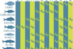 North Carolina Saltwater Fishing Calendar