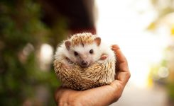 Hedgehog Day Days Of The Year