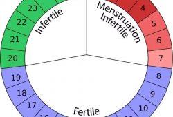 Cycle Pregnancy Calendar
