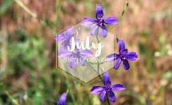 July Birth Flower Larkspur Ftd