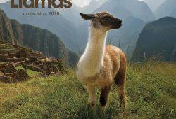 Alpaca Calendar 2018 Uk
