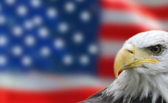 National American Eagle Day June 20 2019 National Today