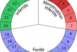 Family Planning Pregnancy Calendar