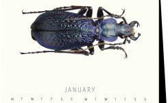 Natural History Museum Beetles Bugs Easel Calendar 2018 Calendar