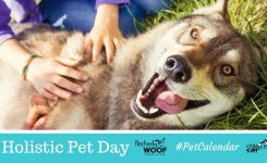 Pet Calendar National Holistic Pet Day Positively Woof