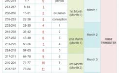 Pregnancy Week Month Calander Cooperative Pics Then Calendar Excel
