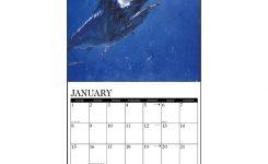 Saltwater Fish 2017 Wall Calendar 9781682341865 Calendars