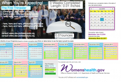 Mini Web Tool Pregnancy Calendar