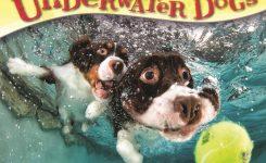 Underwater Dogs Desk Calendar 2018 Calendar Club Uk