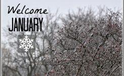 Welcome January 1170×847 Beauty Ninety6