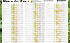 When To Plant Flowers Sowing Calendar Seeds Pots List 1 Annual