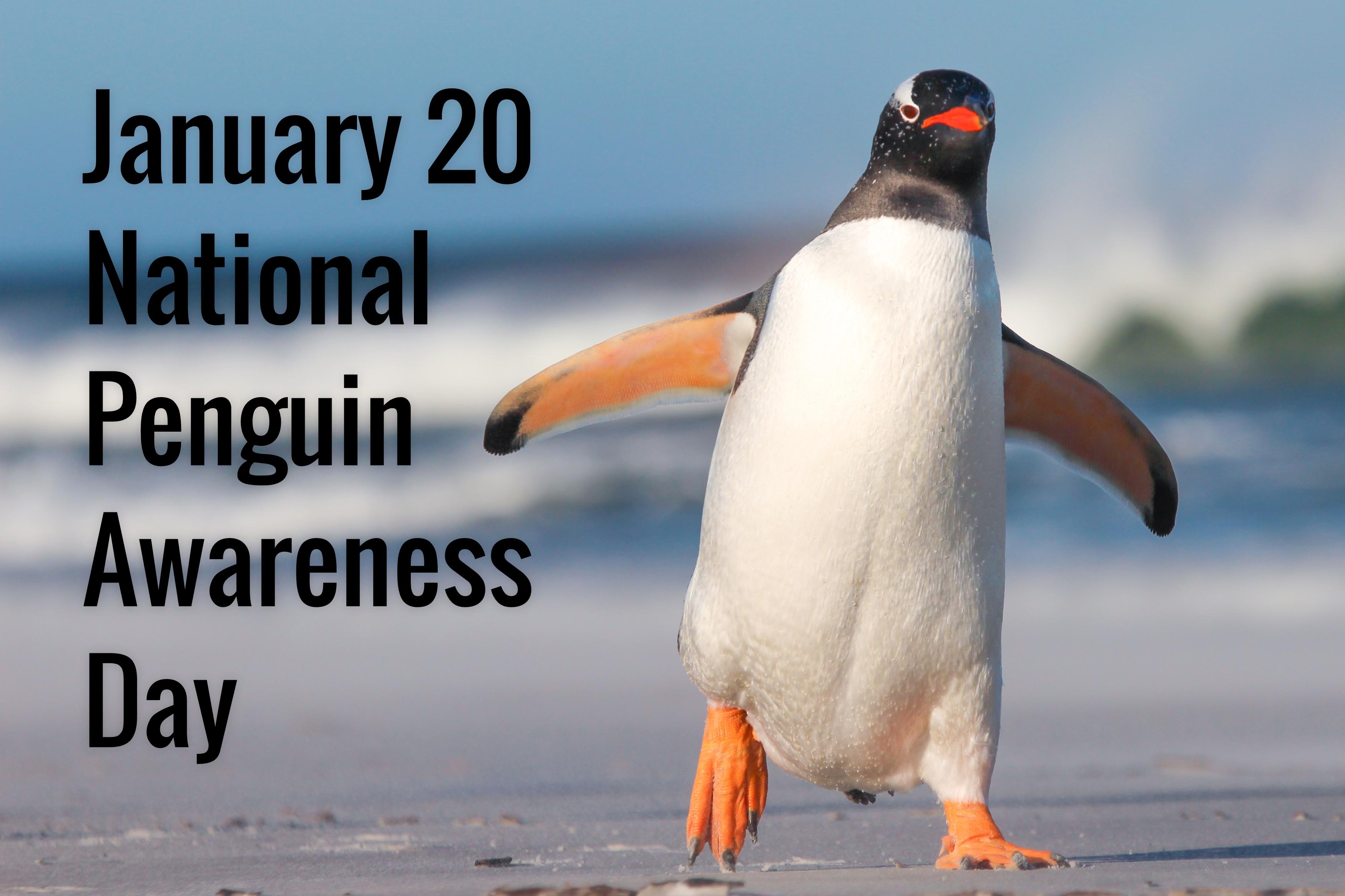 Penguin Awareness Day 2019