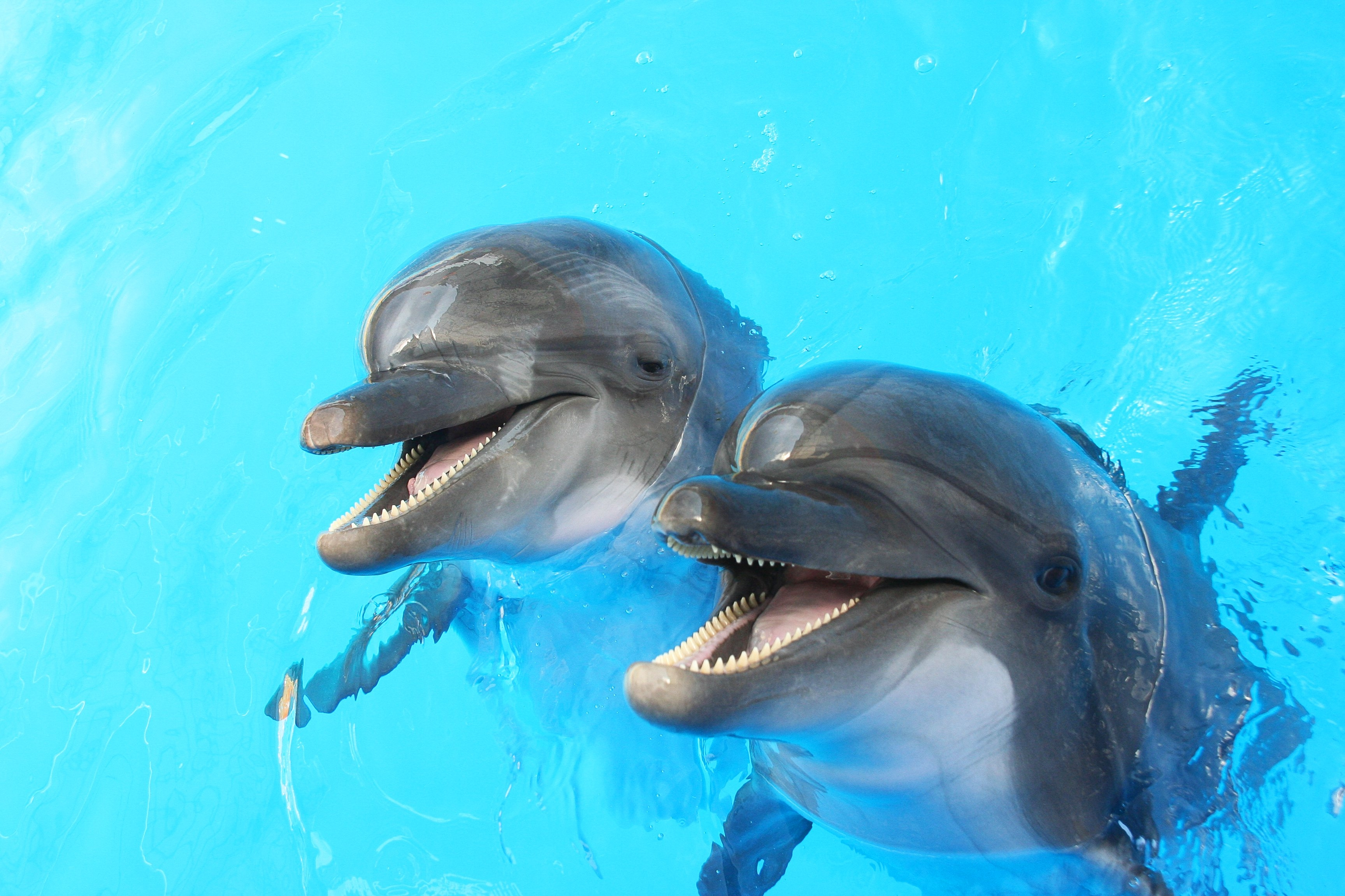 National Dolphin Day 2019