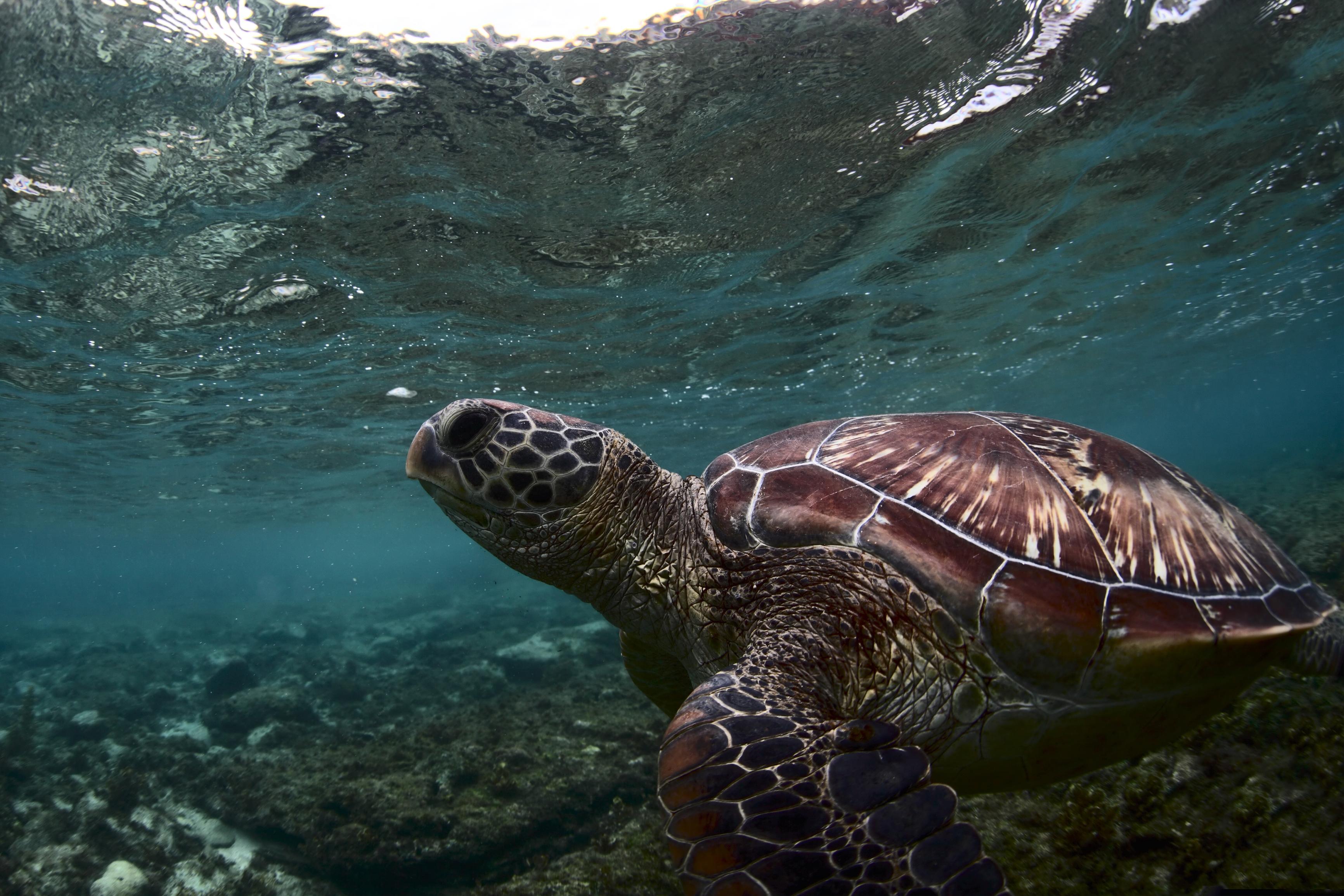 World Sea Turtle Day 2019